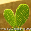 Be Bold To Love
