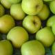 Apple Perception